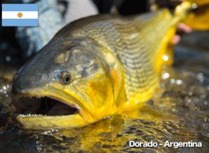 Dorado Argentina