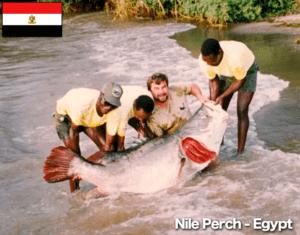 Nile Perch Egypt