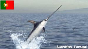 Swordfish Portugal