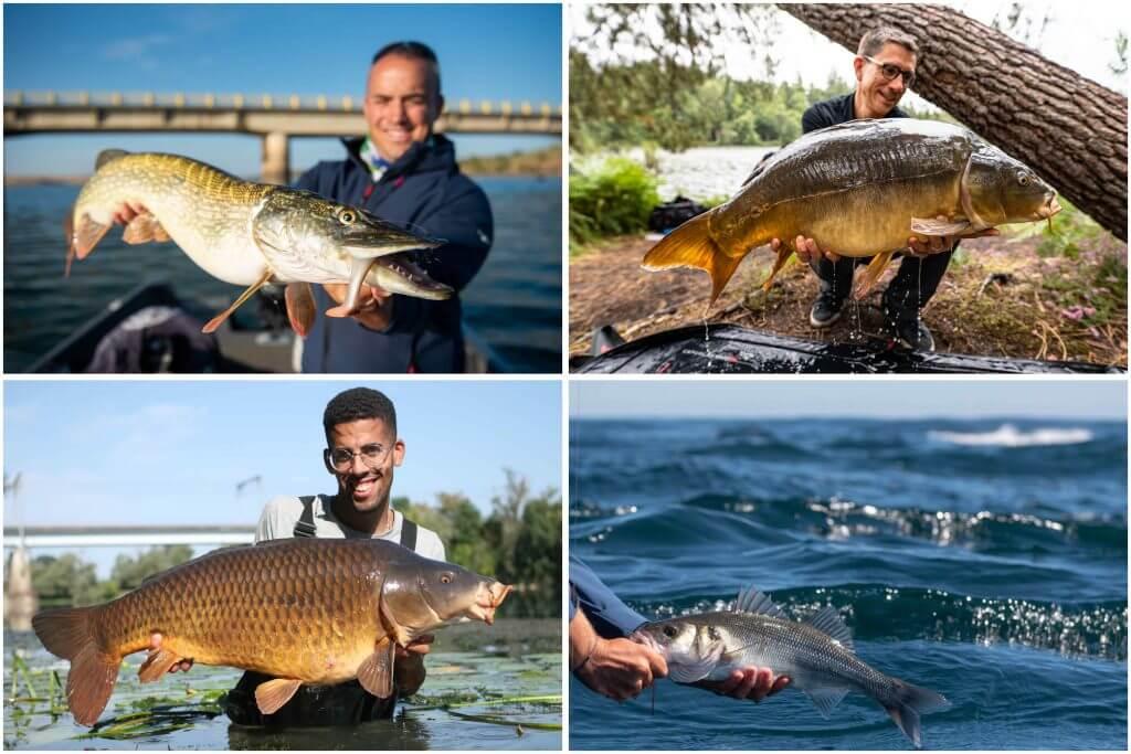 automne meilleure saison pour la pêche des gros poissons